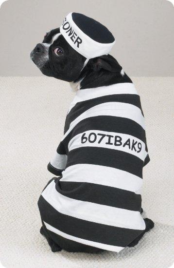 X-SMALL Prison Pooch Pet Halloween Dog Costume