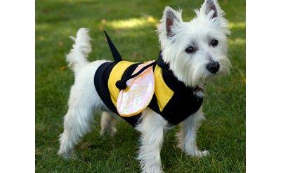 SMALL Bumblebee Buzz Halloween Dog Costume