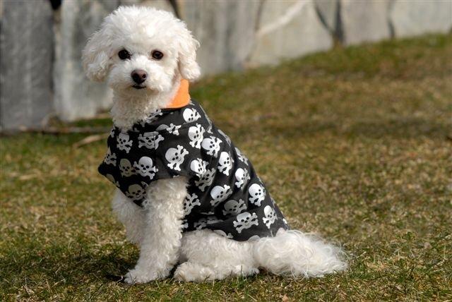 LARGE Skull Shirt Halloween Dog Costume
