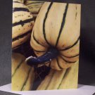 """Delicata Squash""- Photograph- Greeting Card Notecard Blank"