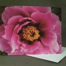"4 Blank Greeting Cards Notecards- ""Peonies""- Photograph"