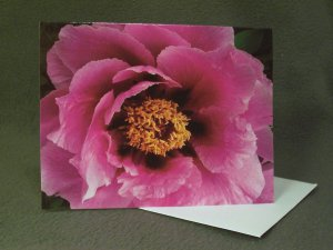 """4 Blank Greeting Cards Notecards- """"Peonies""""- Photograph"""