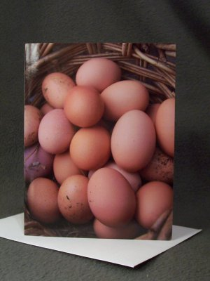 """4 Blank Greeting Cards Notecards- """"Rustic Bounty""""- Chicken Eggs- Photograph"""