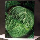 "4 Blank Greeting Cards Notecards- ""Savoy Cabbage""- Photograph"