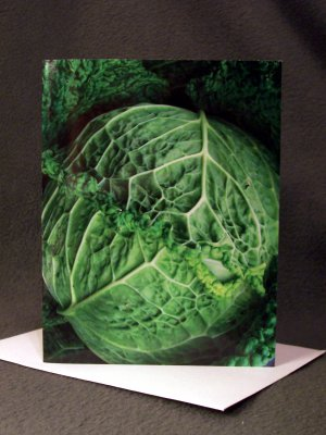 """4 Blank Greeting Cards Notecards- """"Savoy Cabbage""""- Photograph"""