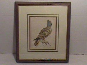 Original Nov 9, 1793 Copper Engraving by William Lewin-GREY FALCON/EC