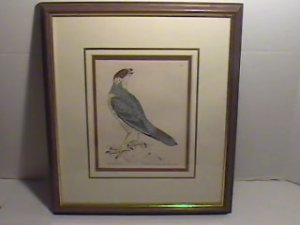 Original Nov 9, 1793 Copper Engraving by William Lewin-Rough Legged FALCON/EC