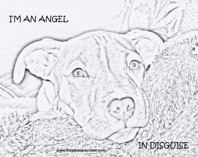 "Pitbull T-Shirt  ""im an angel drawing"""