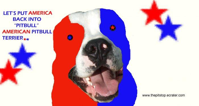 "Pitbull T-Shirt  ""american"""