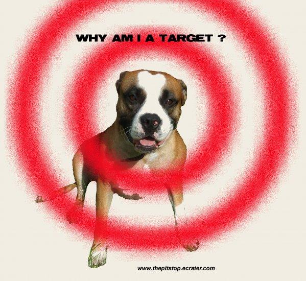 "Pitbull T-Shirt  ""why am i a target"""