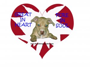 "Pitbull T-Shirt ""pure in heart"""