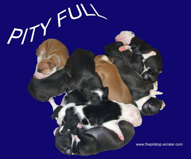 """pitbull t-shirt  """"pity full"""""""