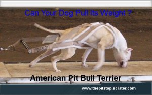 """pitbull t-shirt   """"CAN YOUR DOG PULL"""""""