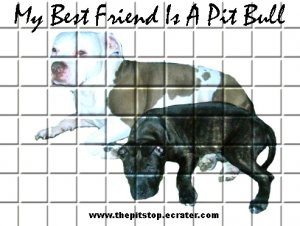"""pitbull t-shirt     """"MY BEST FRIEND"""""""