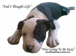 """pitbull t-shirt  """"I THOUGHT LIFE"""""""