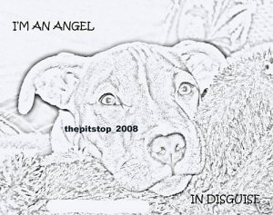 "Brand New Pitbull T-Shirt  ""Im An Angel"""