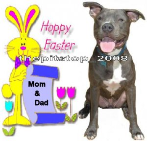 """Brand New Pitbull T-Shirt  """"Happy Easter With Bunny"""""""