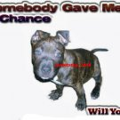"Brand New Pitbull T-Shirt  ""Somebody Gave"""