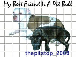 "Brand New Pitbull T-Shirt  ""My Best Friend"""