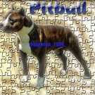 "Brand New Pitbull T-Shirt  ""Pitbull"""