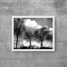 Photography Trees, Clouds , Digital Prints, Wall Art Print