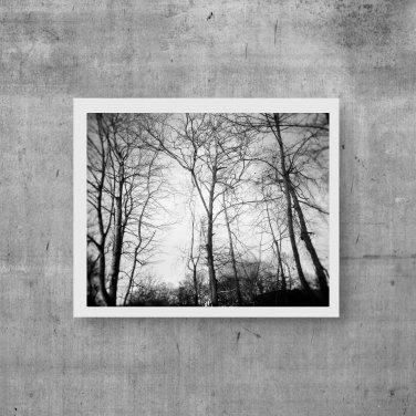 Woodland Photography, Photographic Digital Prints, Wall Art, Gift