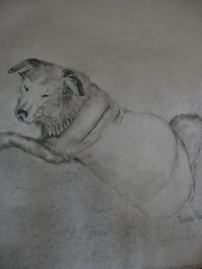 Custom Pencil drawing of your PET