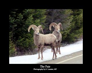 The Pair