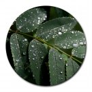 Mousepad FREE SHIPPING mountain ash leaf in the rain