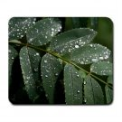 Mousepad mountain ash leaf in the rain FREE SHIPPING