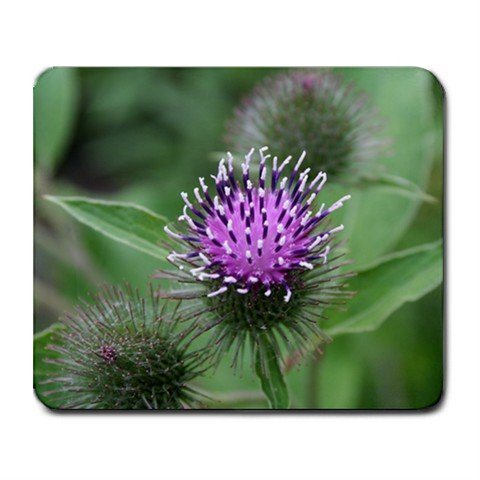 Mousepad Scottish Thistle Purple flower FREE SHIPPING