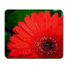 Mousepad FREE SHIPPING Bright red flower and dark green leaves