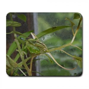 Mousepad FREE SHIPPING Young Anole Lizard on a plant