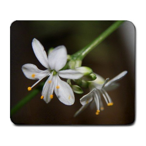 Mousepad FREE SHIPPING Tiny white spider plant flowers