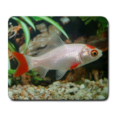 Mousepad FREE SHIPPING Nice fish goldfish aquarium gift for fish person