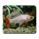 Mousepad FREE SHIPPING Nice fish goldfish aquarium gift for fish person