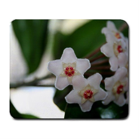 Mousepad FREE SHIPPING fuzzy neat HOYA flowers