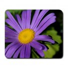 Purple Daisy Mousepad  NEW   Free shipping
