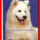 Book Dog Samoyeds By Joyce Renaud ~ Copyright 1983 VGd Cond