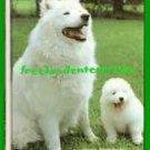 Book Dog Samoyeds By Joyce Renaud ~ Copyright 1980 VGd Cond