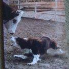 The Total Australian Shepherd: Beyond the Beginning