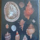 Seashells of Australia