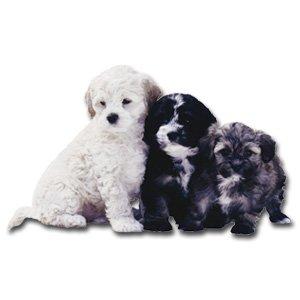 HOMEMADE DOG TREAT RECIPES EBOOK, ALL NATURAL TREATS