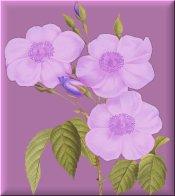 Purple Flowers on Purple eCrator Store Logo Set Web Set OOAK #E21