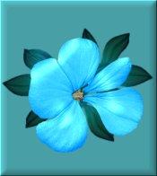 Bright Aqua Flower on Aqua eCrator Store Logo Set Web Set OOAK #E24