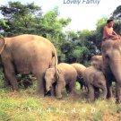 Elephant's Family Postcard