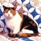 CALICO CATS 2007 WALL CALENDAR