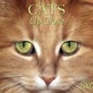 CATS UP CLOSE 2007 DELUXE WALL CALENDAR