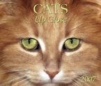 CATS UP CLOSE 2007 DELUXE WALL CALENDAR