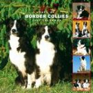 365 DAYS OF BORDER COLLIES 2007 WALL CALENDAR